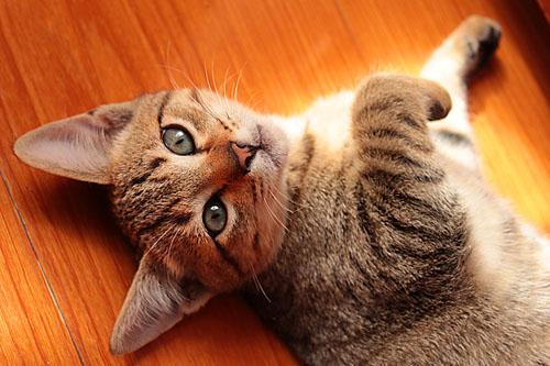 imagem gato otimizada